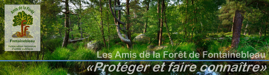 Amis Foret Fontainebleau